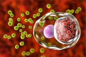 News: 【常見性病】衣原體傳染途徑、症狀及檢查