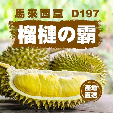 Picture of Aplex Malaysia's D197 Musang King Durian