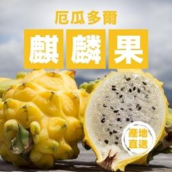 Aplex Yellow Pitaya