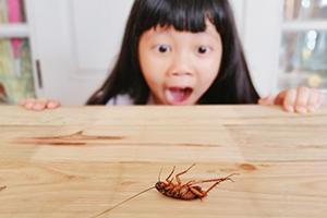 News: 【蟑螂天敵揭秘】蟑螂怕什麼?五招有效驅蟑螂!(附滅蟲、去塵蟎及驅蚊器推介)
