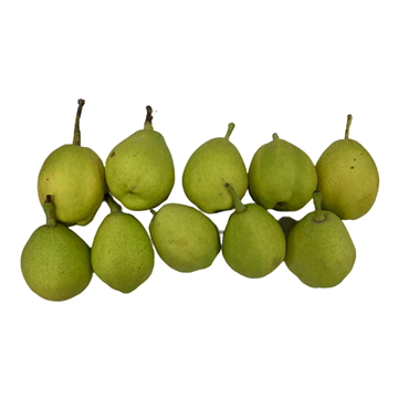 Picture of Fresh Checked Xiang Li (Pear) 10 pieces