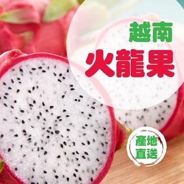 圖片 Fresh Checked 原箱越南白肉火龍果 (L) (9KG, 14-18隻)