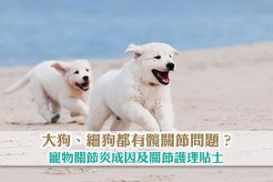 News: 大狗、細狗都有髖關節問題?寵物關節炎成因及關節護理小貼士