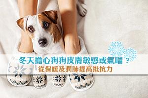 News: 冬天擔心狗狗皮膚敏感或氣喘-潤肺提高抵抗力產品一覽