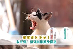 News: 【預防貓口炎】貓貓刷牙小貼士 貓牙膏、貓牙刷推薦及優惠