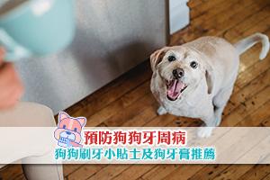 News: 預防狗狗牙周病 : 幫狗狗刷牙小貼士 附狗牙膏推薦