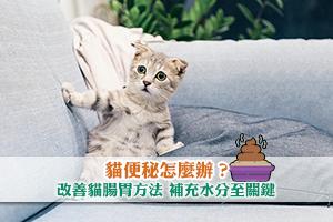 News: 【貓便秘怎麼辦】改善貓腸胃方法 補充水分至關鍵