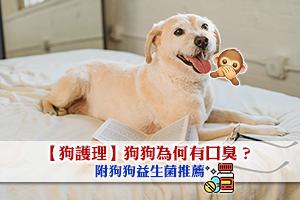 News: 【狗護理】狗狗口臭原因及狗狗益生菌推薦