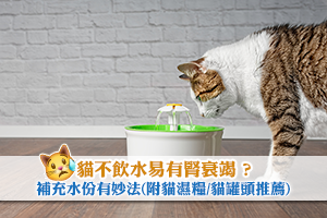 News: 貓不飲水易有腎衰竭 ? 補充水份有妙法 (內附貓濕糧/貓罐頭推薦)